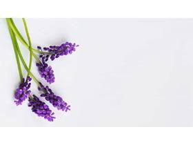 四��紫色�r花PPT背景�D片
