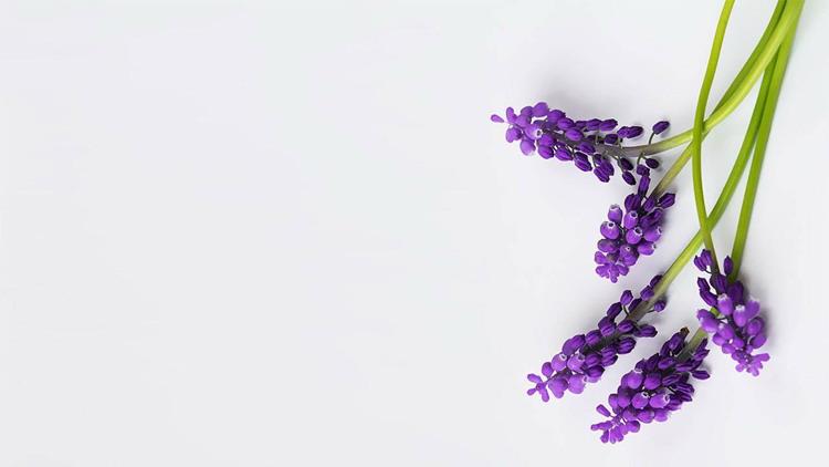 四张紫色鲜花PPT背景图片