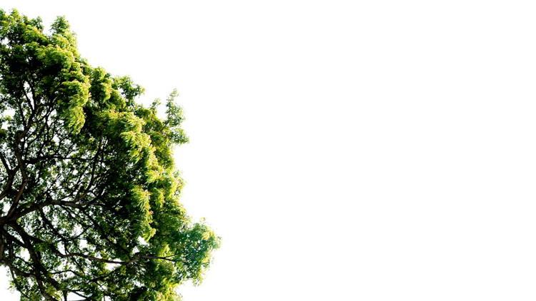五张精美叶子PPT背景图片