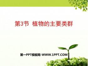 《植物的主要类群》PPT免费课件